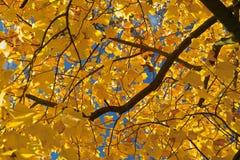 jesienią śniadanie Obraz Royalty Free
