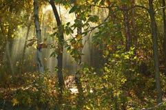 jesienią światło Fotografia Royalty Free