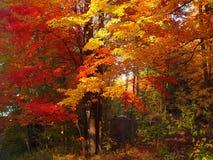 jesienią świetność obrazy stock