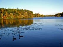 jesienią świetność Zdjęcie Royalty Free