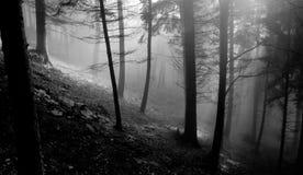 jesienią abstrakcyjne tła zestaw projektów Obraz Stock