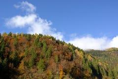 jesienią abstrakcyjne tła zestaw projektów Fotografia Stock