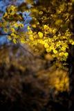 jesienią abstrakcyjne tła zestaw projektów Liście i ulistnienie Zdjęcie Stock