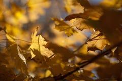 jesienią abstrakcyjne tła zestaw projektów Liście i ulistnienie Zdjęcia Royalty Free