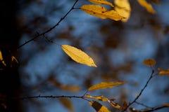 jesienią abstrakcyjne tła zestaw projektów Liście i ulistnienie Fotografia Stock