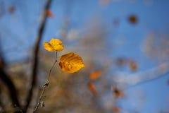 jesienią abstrakcyjne tła zestaw projektów Liście i ulistnienie Zdjęcia Stock