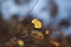 jesienią abstrakcyjne tła zestaw projektów Liście i ulistnienie Obraz Royalty Free