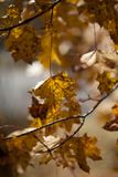 jesienią abstrakcyjne tła zestaw projektów Liście i ulistnienie Obraz Stock