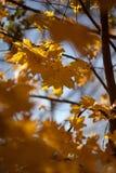 jesienią abstrakcyjne tła zestaw projektów Liście i ulistnienie Obrazy Stock