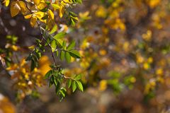 jesienią abstrakcyjne tła zestaw projektów Liście i ulistnienie Fotografia Royalty Free