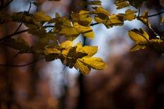 jesienią abstrakcyjne tła zestaw projektów upadek Zdjęcia Stock