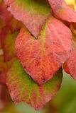 jesienią abstrakcyjne tło Obraz Stock