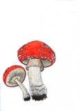 jesienią amanita muscaria grzybów niebezpieczeństw Fotografia Stock