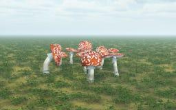 jesienią amanita muscaria grzybów niebezpieczeństw Fotografia Royalty Free