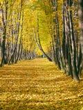 jesienią avenue Zdjęcie Stock