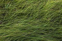 jesienią blisko trawy charakter tła, Zdjęcie Royalty Free