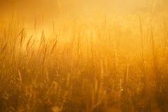 jesienią blisko trawy charakter tła, Obrazy Royalty Free