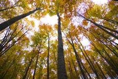 jesienią drzewa leśne Fotografia Royalty Free
