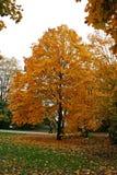 jesienią drzewo obraz stock
