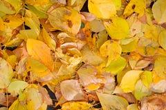 jesienią ilustracji tła komputerowych liście Obrazy Royalty Free
