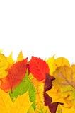 jesienią ilustracji tła komputerowych liście Zdjęcie Stock