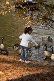 jesienią karmienia zdjęcie royalty free