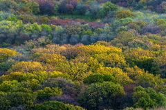 jesienią kolor drzewa Fotografia Royalty Free
