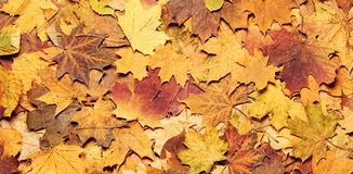 jesienią kolorowe tło Zdjęcie Stock