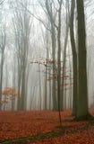 jesienią leśny bukowy mglisty Zdjęcie Royalty Free