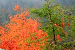 jesienią mgła. Zdjęcie Royalty Free