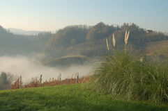 jesienią mgła. Obraz Stock