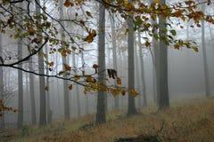 jesienią mgła. Zdjęcia Stock