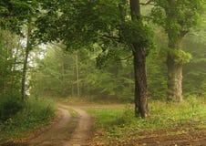 jesienią mgłowa road zdjęcia royalty free