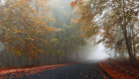 jesienią mgłowa road Obrazy Stock