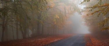 jesienią mgłowa road Fotografia Stock