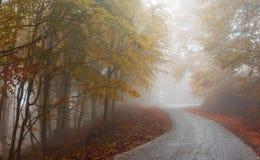 jesienią mgłowa road Zdjęcie Royalty Free
