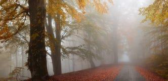 jesienią mgłowa road Obrazy Royalty Free