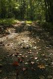 jesienią natury obraz stock