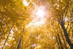 jesienią natury Obrazy Royalty Free