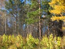 jesienią niebieskiego nieba drzewa Obrazy Stock