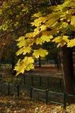 jesienią obfitolistni drzewa Zdjęcia Royalty Free