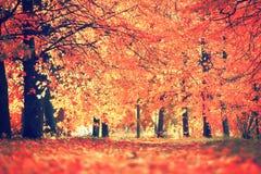 jesienią piękna tła wektor ilustracyjny Zdjęcie Royalty Free