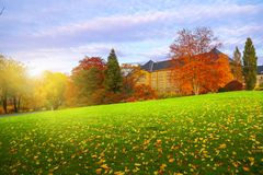 jesienią piękne drzewa Obrazy Royalty Free