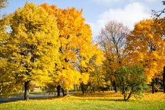 jesienią piękne drzewa fotografia stock