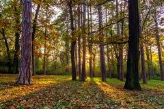 jesienią piękne drzewa Zdjęcie Stock