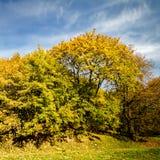 jesienią piękne drzewa obraz royalty free