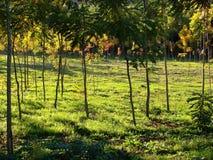 jesienią pola zdjęcie royalty free