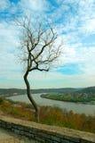 jesienią scraggly drzewo zdjęcie stock