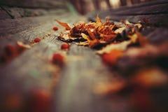 jesienią tło łatwo redaguje obraz charakter wektora Fotografia Royalty Free