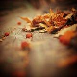 jesienią tło łatwo redaguje obraz charakter wektora Obraz Royalty Free